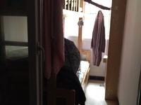 出租新荧鸿城2室1厅1卫60平米700元/月住宅